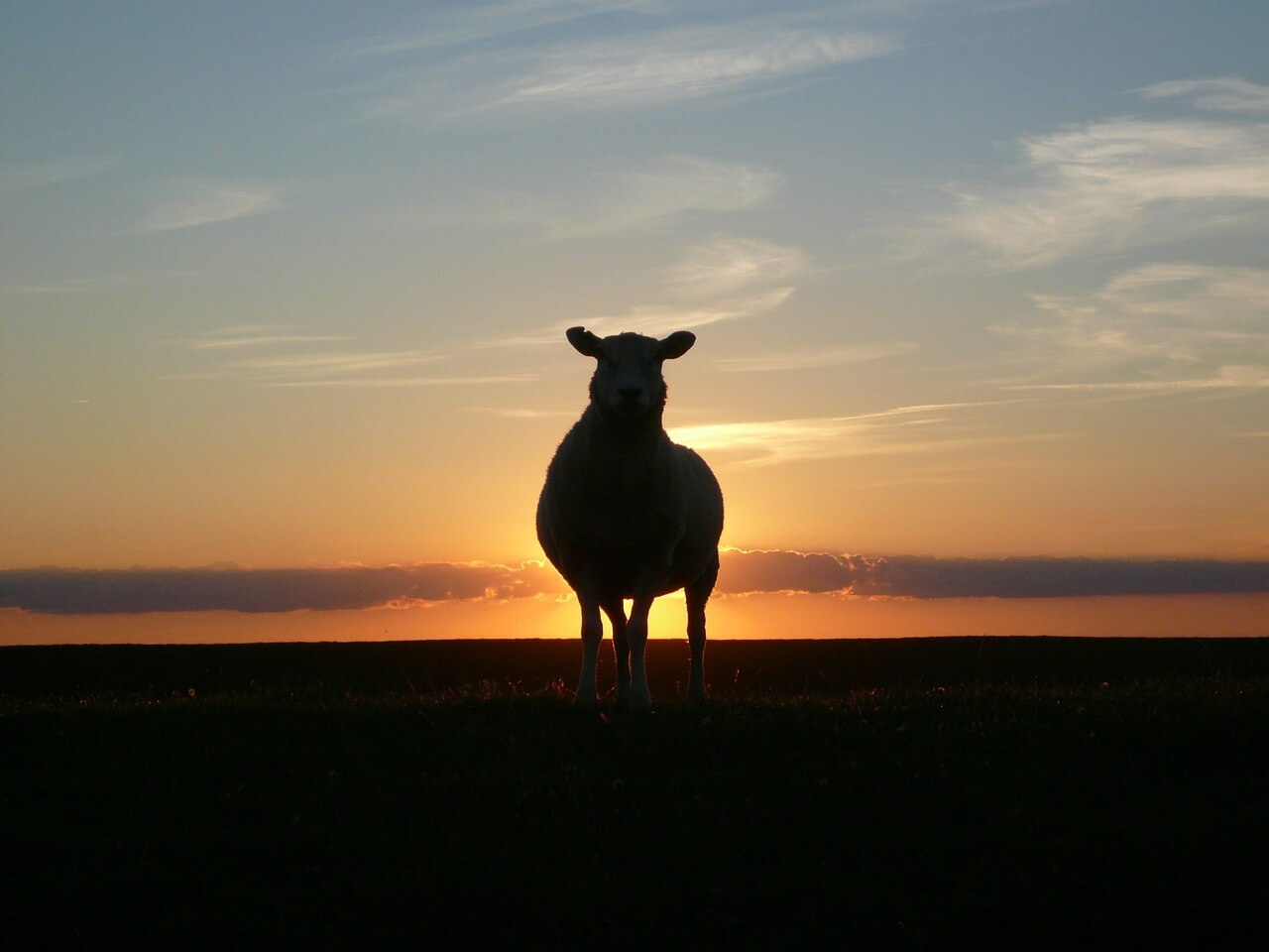 sunset-50494_1280-2-1.jpg